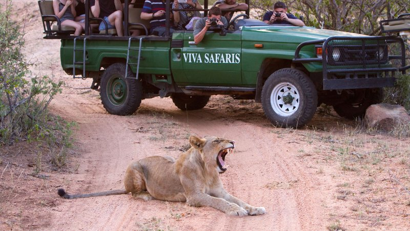5 days lodge and treehouse kruger park safari, south africaKrugerpark Safari Kosten.htm #13
