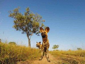 5 Days Safari in Lake Manyara, Serengeti, and Ngorongoro Crater in Tanzania