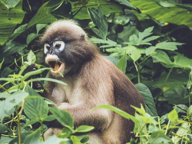 Primate Trekkings