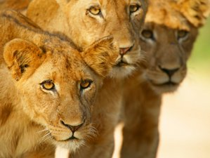 10 Days Wildlife Extravaganza Safari in Africa