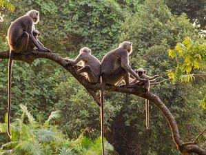 3 Day Wonderful Safari Tour in Bardia National Park, Bheri Zone