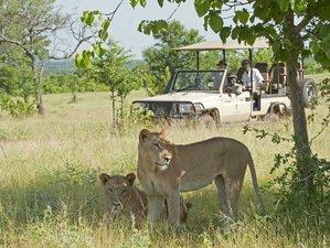 8 Day Luxury Sanctuary Retreats Flying Wildlife Safari in Tanzania