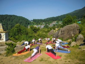 7 Days Find the Balance Between Mind and Soul: 50-Hour Yin Yoga Teacher Training in Goa, India