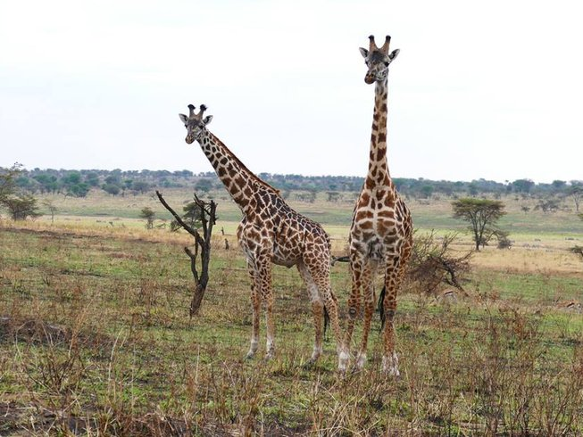5 Days Safari in Serengeti National Park