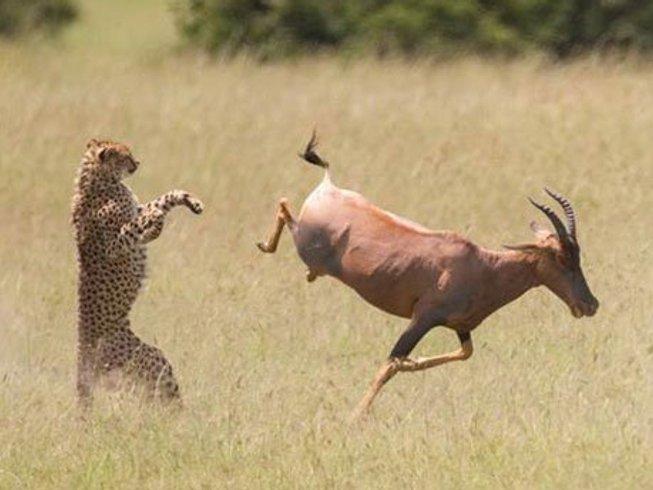 6 Days Ndovu Wlidlife Safari Kenya