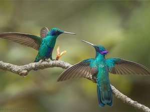 14 Days Birdwatching and Wildlife Tour in Cloud Forest and Galapagos, Ecuador