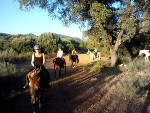 8 Day Horse Riding and Yoga Holiday in Villamartin, Cádiz