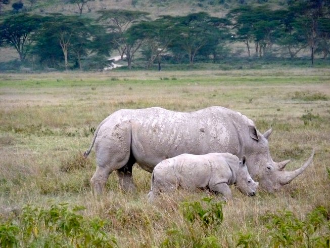 8 Days Small Group Safari Tour in Kenya