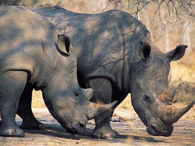 5 Days Safaris Kenya from Nairobi to Maasai Mara