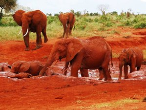 6 Days Luxury Lodge Safari in Kenya, East Africa