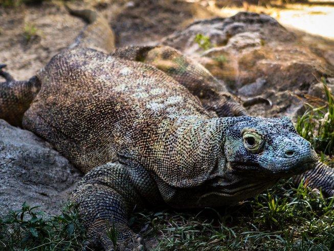 Komodo Dragon Tours