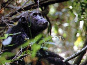 4 Days Chimpanzee Safaris in Tanzania