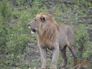 3 Tage Aufregende Safari im Hluhluwu Imfolozi Park, Südafrika