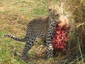 5 Day Big Five Safari in Moremi Game Reserve, Okavango Delta