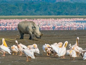 5 Days Incredible Budget Safari in Kenya