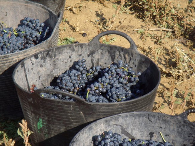 10 Days Wine and Culinary Vacations in Spain