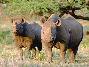 14 Days Exciting Safari South Africa, Mozambique, and Swaziland