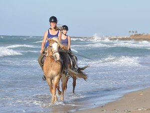 8 Day Bitless and Barefoot Horse Riding Holiday in Hersonissos, Crete