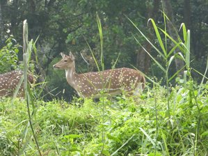 3 Day Safari in Chitwan National Park, Kathmandu