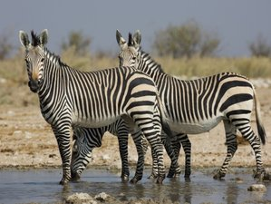 11 Days Namibia Experience Accommodated Tour