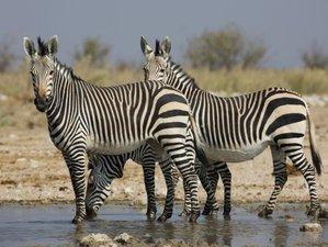 11 días de tour por Namibia