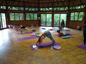 8 Days Rainforest Ecological Healing, Meditation and Yoga Retreat in Brazil