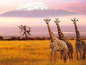 7 Days Family Safari in Nairobi, Kenya