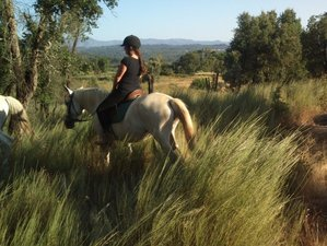 4 Days Dance with Horses Riding Holiday in Portugal