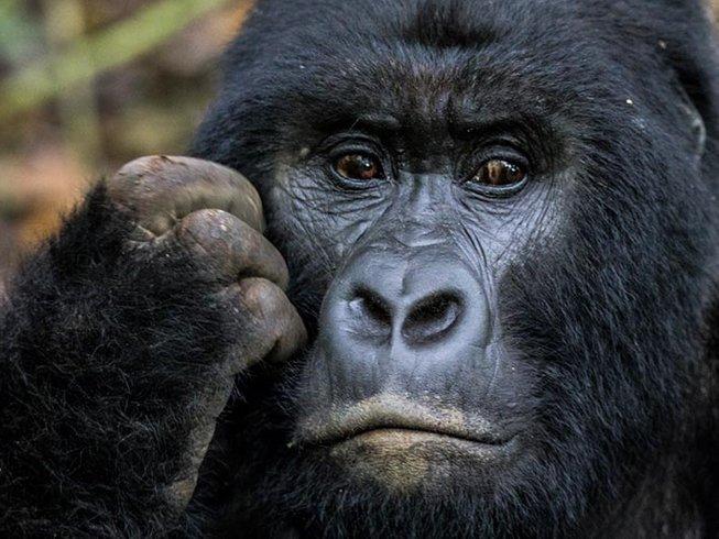 3 Days Trekking and Gorilla Safari in Uganda