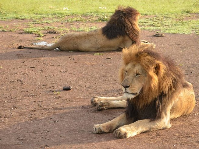 3 Days Wildlife Safari in Kenya