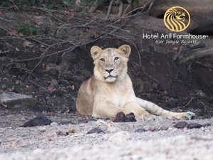 4 Day Gir Jungle Trail and Devalia Park Safari