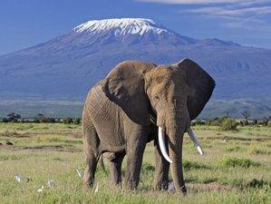 6 Days Scenic Maasai Mara, Lake Nakuru, and Amboseli Safari Tour in Kenya