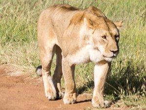 7 Days Wildlife Adventure Safari in Kenya