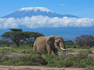 8 Days Marangu Route Kilimanjaro Safari in Tanzania
