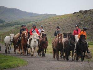 5 Day Home at Hestasport Horse Riding Holiday in Skagafjörður