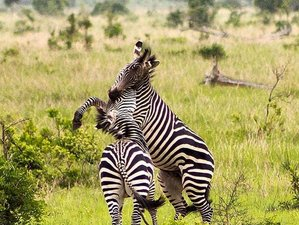 5 Days Exciting Safari in Selous Game Reserve and Mikumi National Park, Tanzania