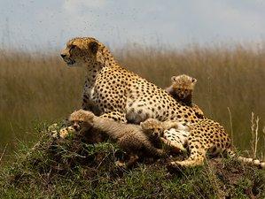 3 Days Maasai Mara Private Lodge Safari in Kenya