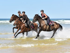 8 Day Atlantic Coast Trail Ride in Mimizan, Landes