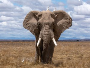 10 Days Maasai Mara, Lake Nakuru, Amboseli, Tsavo East, and Diani Beach Safari in Kenya