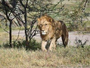 7 Days Mix of Lodge and Camping All-Inclusive Private Safari in Northern Tanzania
