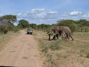 6 Days Short and Amazing Tanzania Safari