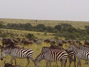 4 Days Budget Tanzania Safari