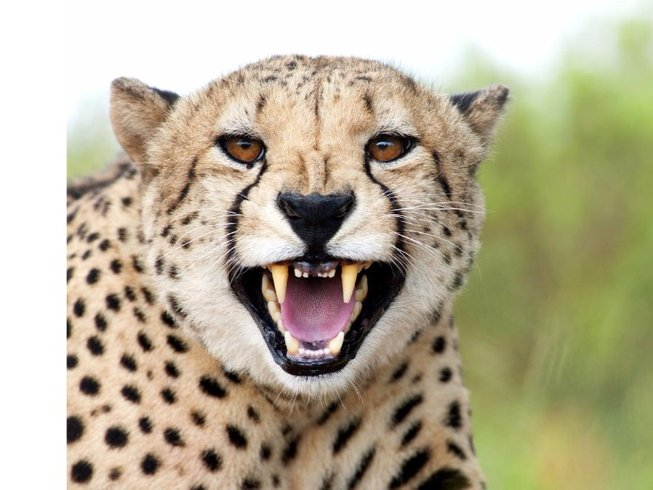 3 Days Shamwari Safari South Africa