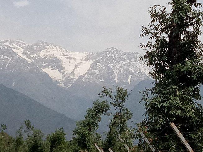 8-Daagse Detox, Meditatie en Yoga Retreat in de Himalaya's, India
