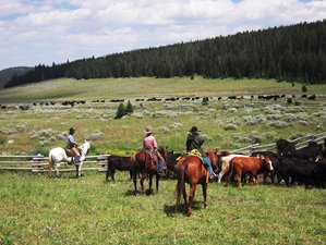 6 Days July Cattle Drive Ranch Vacation in Sheridan County, Wyoming