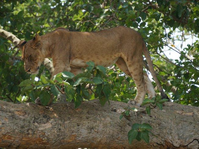 3 Days Queen Elizabeth National Park Safari in Uganda