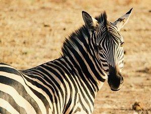 4 Days Classic Safari in Lake Manyara National Park and Ngorongoro Crater, Tanzania