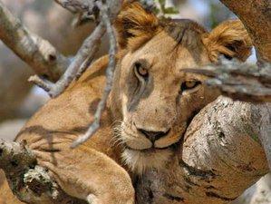 3 Days Maasai Mara Escapade Safari in Kenya