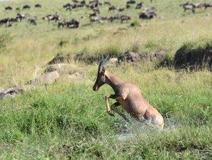 8 Days Classic Safari Exploration in Kenya