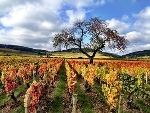7 Days Burgundy Wine and Food Cycling Holiday in France